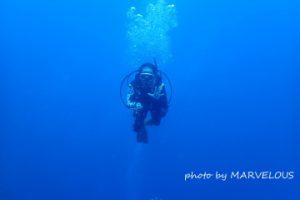 水中のゲスト